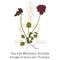 societa-botanica-italiana
